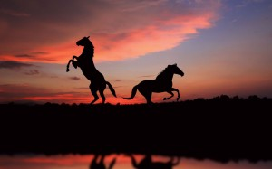 Horse-Sunset-Freedom-900x1440