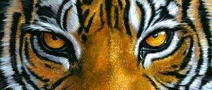 tiger_eyes1