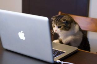 a.aaa-Even-The-Cats-Use-Facebook-